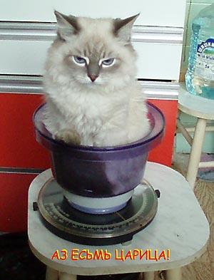 невская маскарадная котята новорожденные фото #7